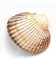 produits-coques-baie-d-isignie